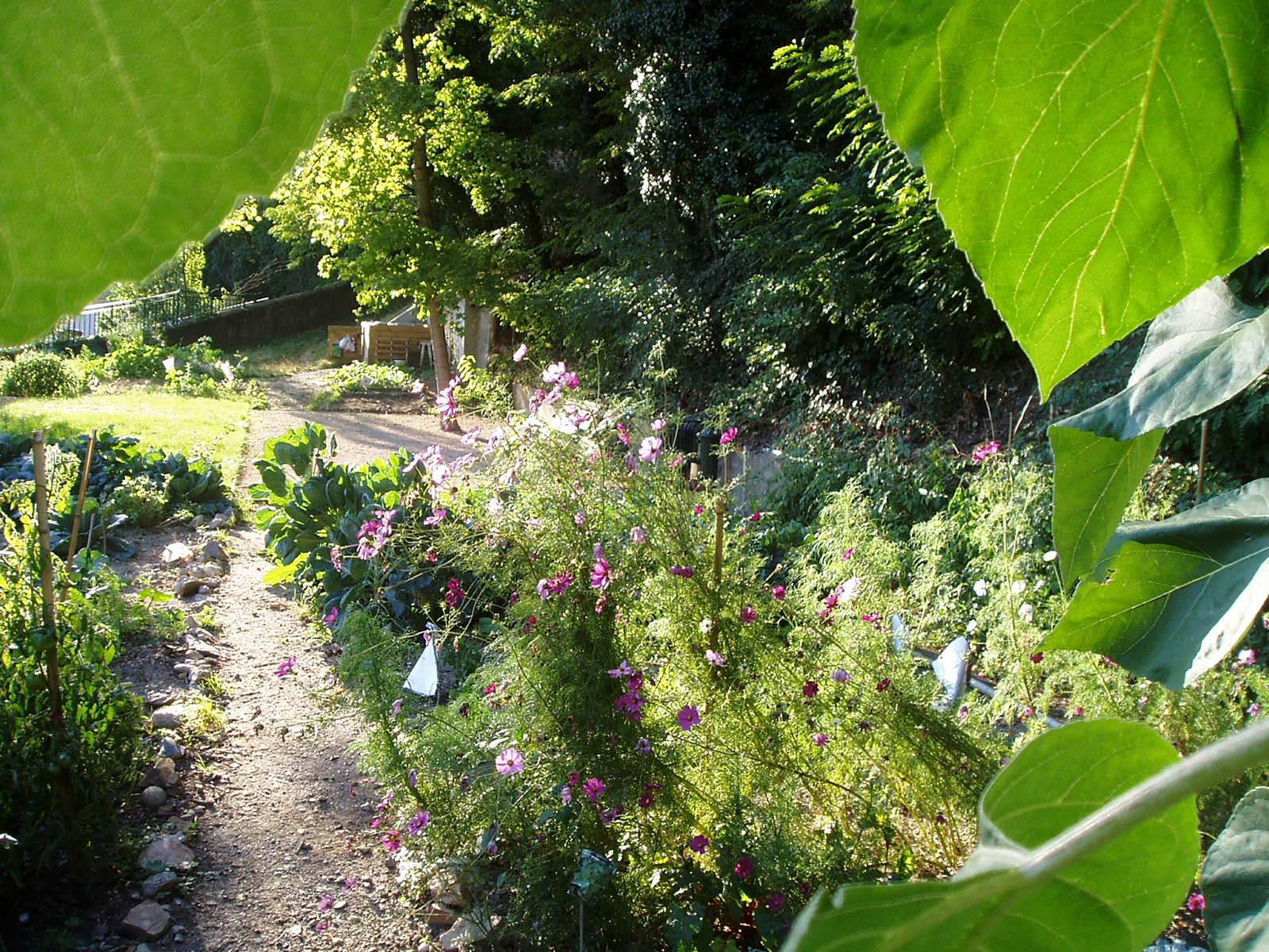 Jardin de la muette le passe jardins for Point d eau dans le jardin