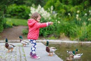 Donner du pain aux oiseaux : une fausse bonne idée !